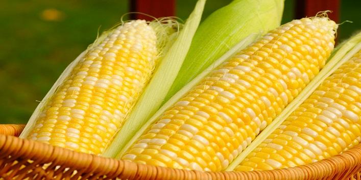 Eating corn during monsoon