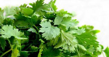 coriander leaves for beautiful skin