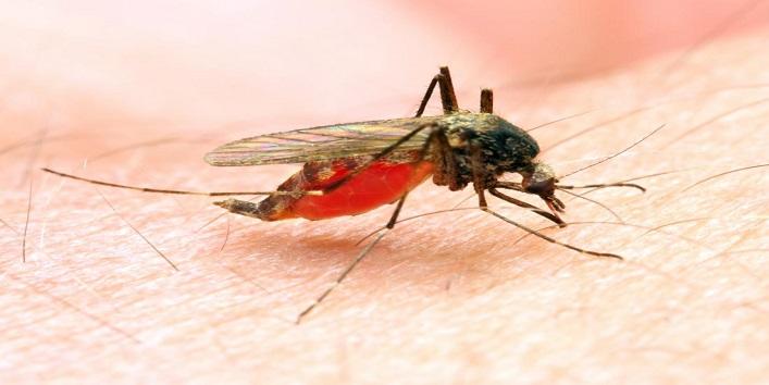 Moderate dengue symptoms