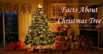 Facts About Christmas Tree