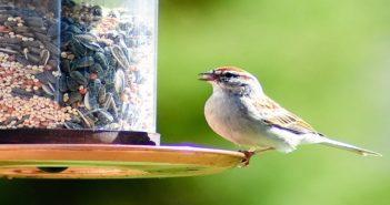 Benefits of Feeding the Birds
