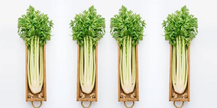 Celery-Brief-introduction